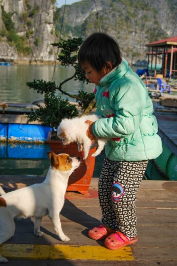 Halong Bay, Vietnam, Dogs