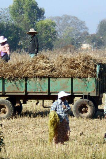 Crop Farming - InsideBurma Tours