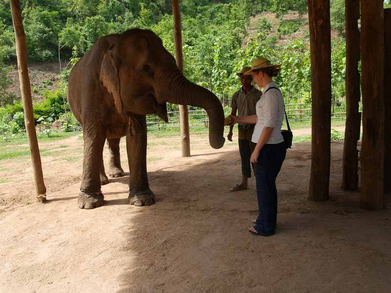 InsideAsia's Charlotte meeting one of Green Hill Valley's seven retired elephants