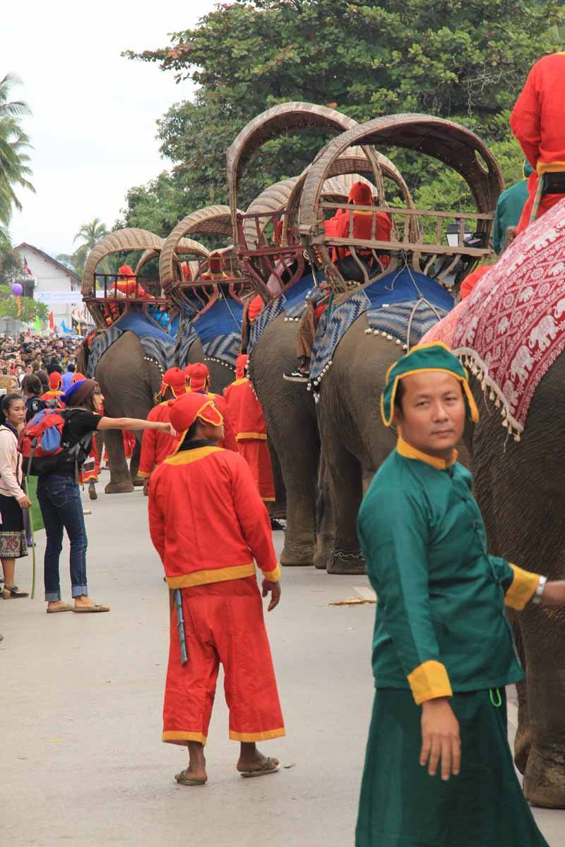 Elephants taking part in the parade