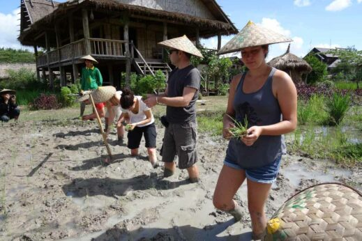 Living Land Farm - Planting Rice