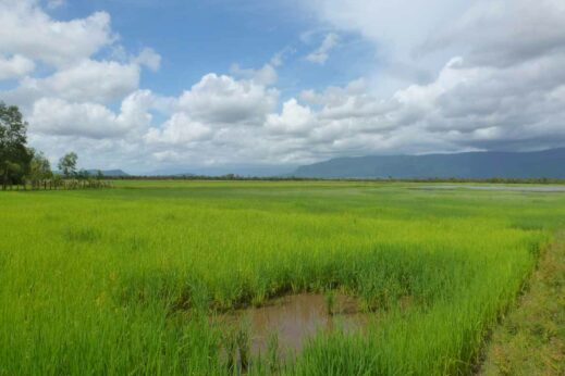 Enjoy the Cambodian countryside on a cultural bike tour