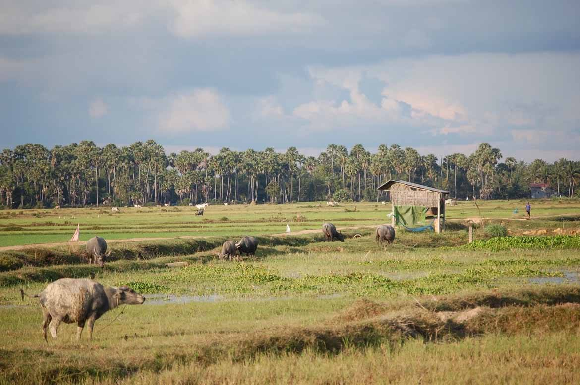 The Siem Reap countryside