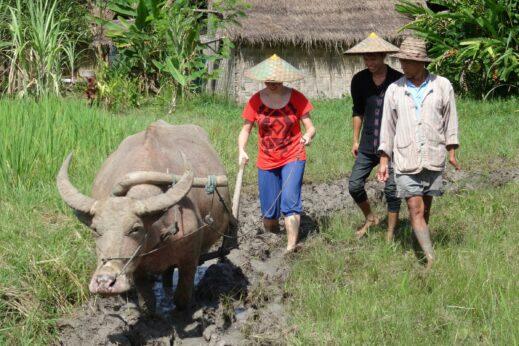 Ruth trying her hand at farming at The Living Land - Luang Prabang, Laos