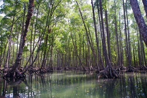 Swampy mangrove forest in the Myeik Archipelago, Burma (Myanmar)