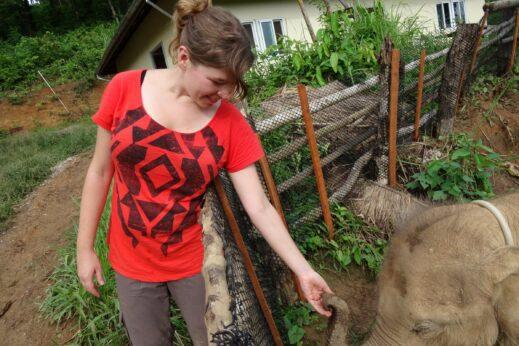 Meet the elephants in Sayaboury, Laos