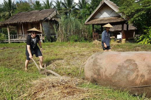 Buffalo farm in Laos