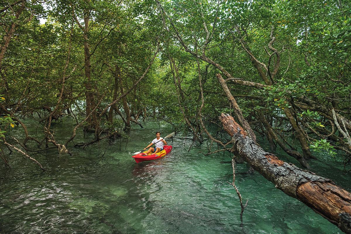 kayak wa ale island holiday