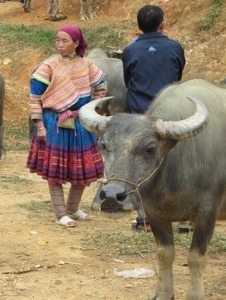 Buffalo at the market