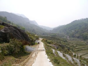 Road through the paddy fields