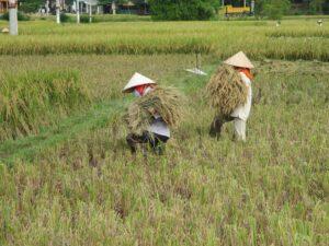 Rural retreat