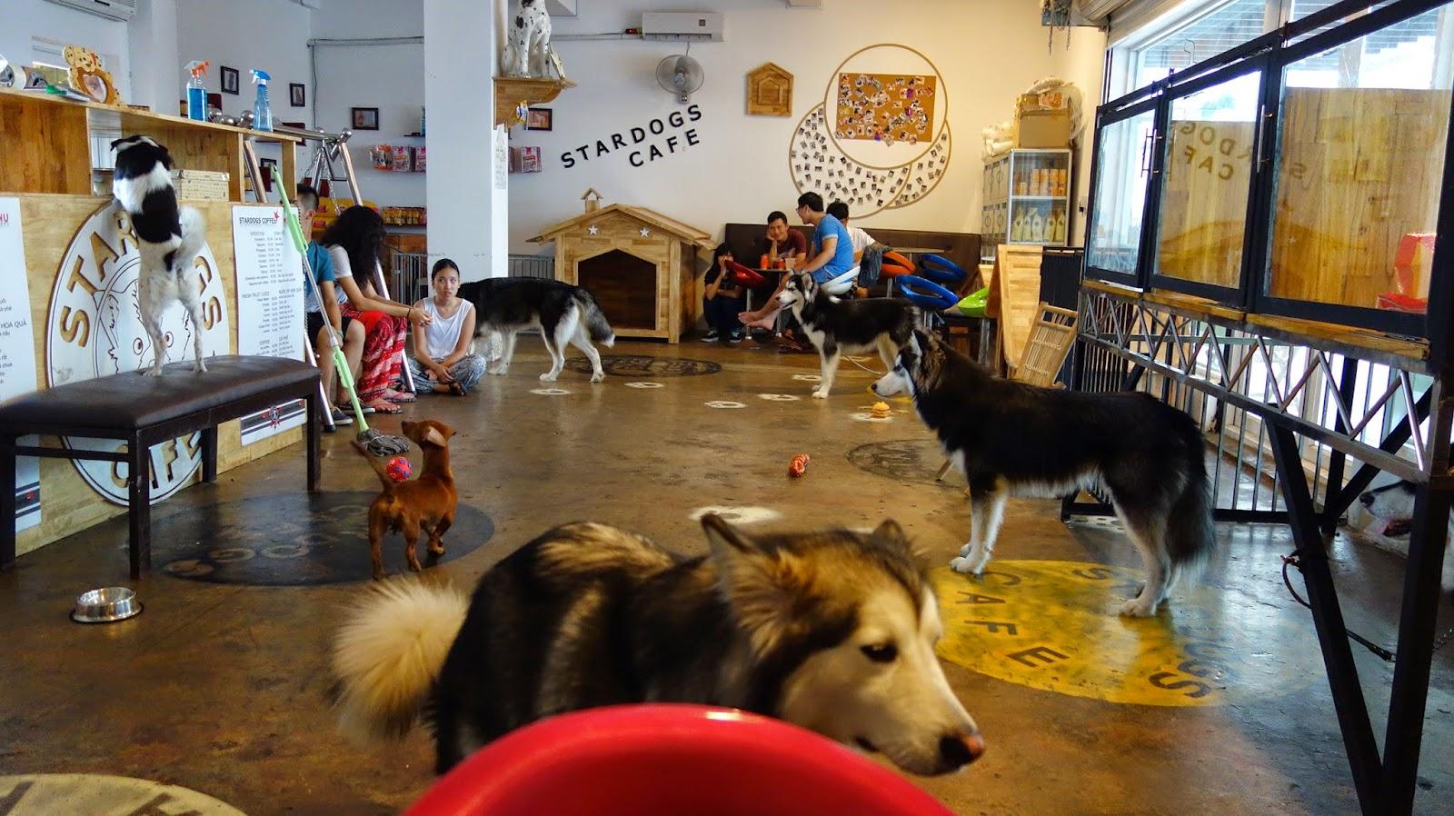 Vietnam's animal cafés   InsideVietnam Blog