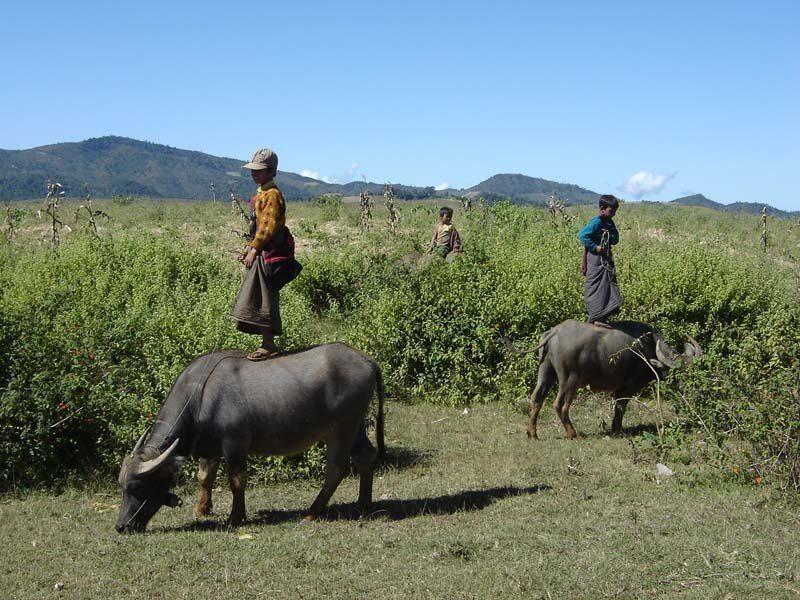 Kanpetlet cow boys