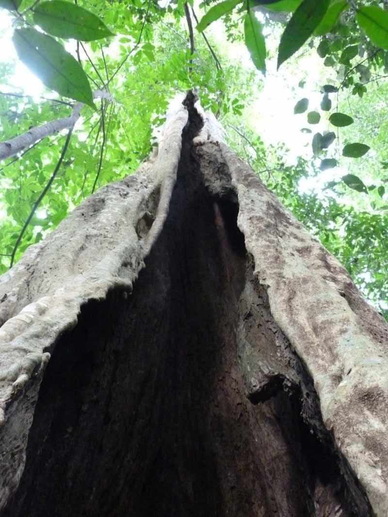 Nam Cat Tien tree