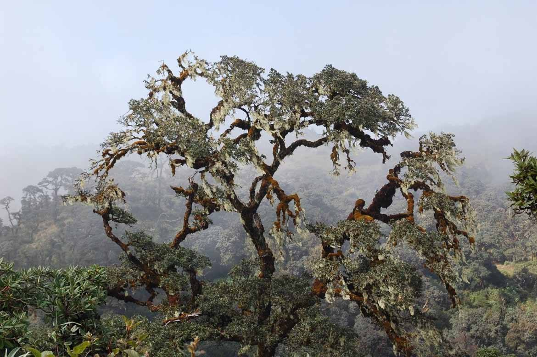 A tree on Mount Victoria