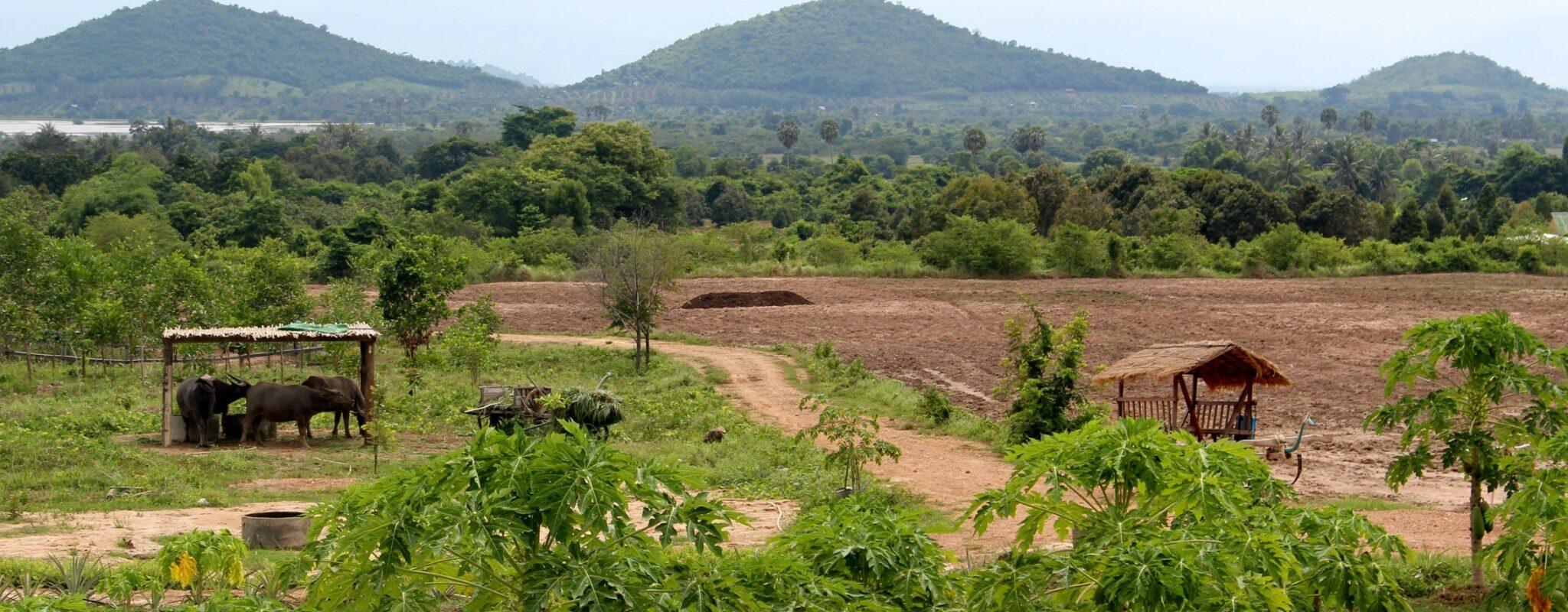 Kampot Pepper Farm, Cambodia