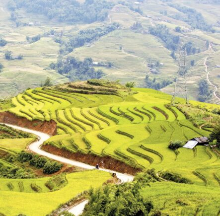 Rice paddies in Sapa