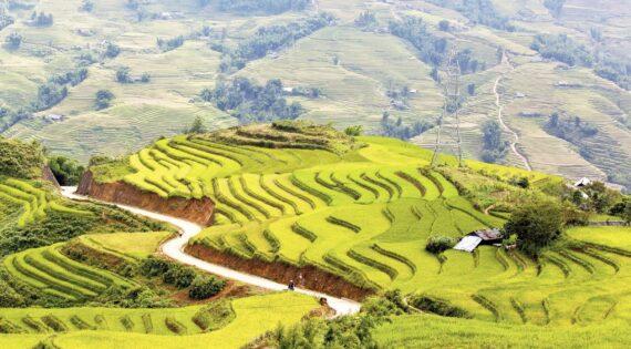 Rice paddies in Sapa