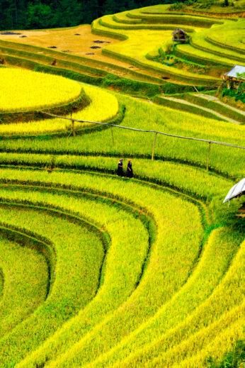Sapa rice terraces, VIetnam