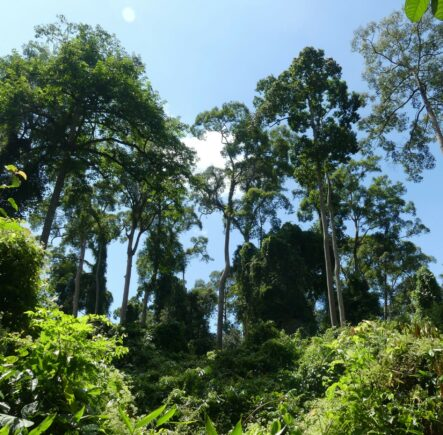 Danum Valley Rainforest