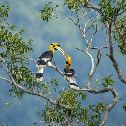 Birds in Borneo