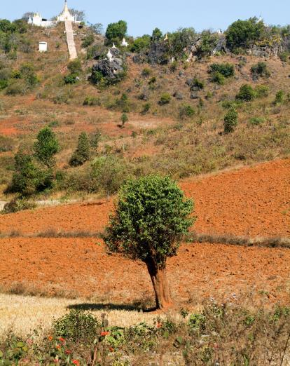 Tree in Pindaya landscape