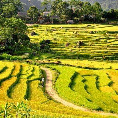 Rice terraces at Pu Luong