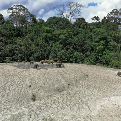Wildlife trekking in Tabin