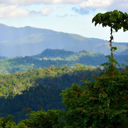 View of the canopy in Danum Valley