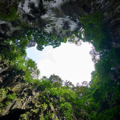 Looking up from Mulu's caves