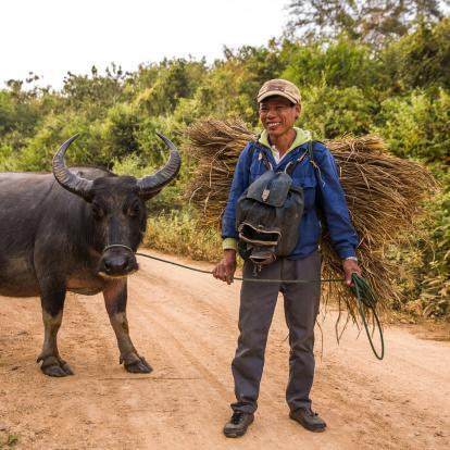 Man and buffalo in Mekong