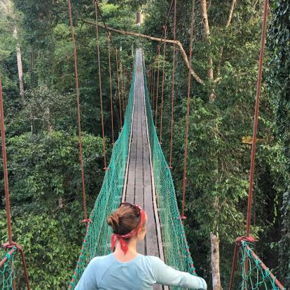 Canopy walkway in Danum Valley - Claire Allison