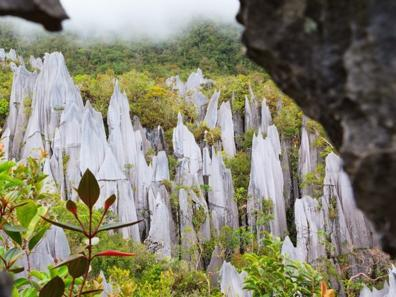Trekking in the Pinnacles in Mulu National Park