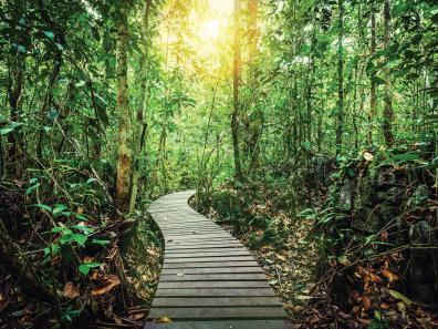 Boardwalk at Danum Valley