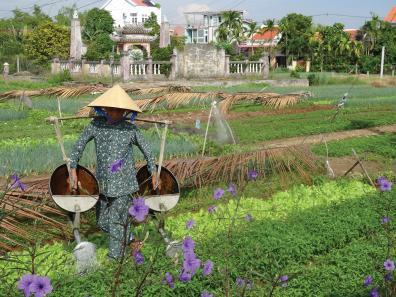 Farming in Vietnam