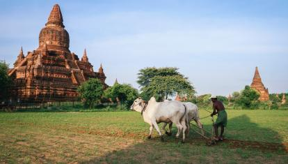 A farmer working an ox pulled cart beneath a teample in Bagan