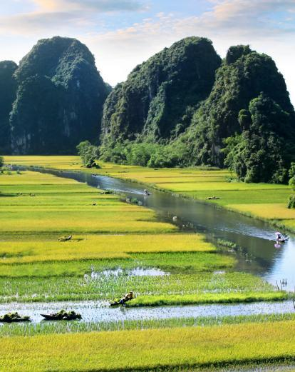 Rice paddies and mountains of Ninh Binh